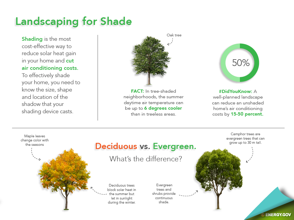 landscaping with trees infographic
