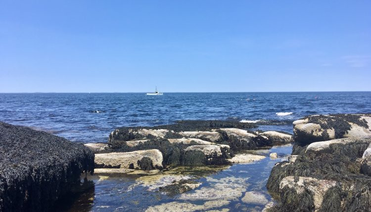 halibut point state park in rockport, mass
